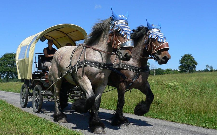 Kutschfahren-Oberland