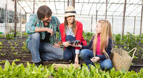 Blumen- und Gartenerde Anbau